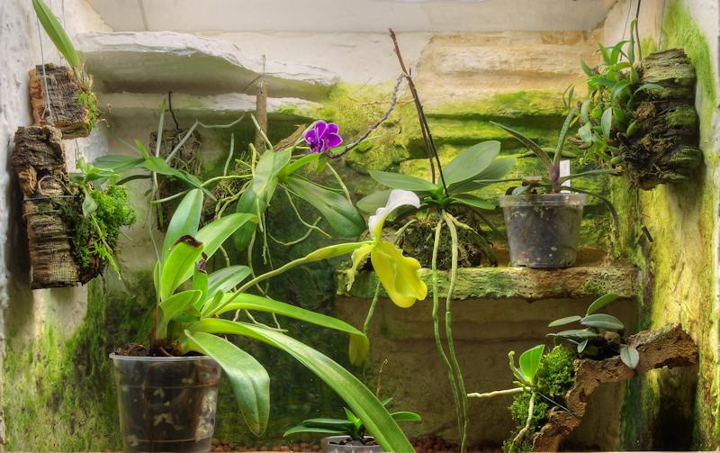 wie gro sind eure terrarien und wie sehen sie aus orchideenforum. Black Bedroom Furniture Sets. Home Design Ideas